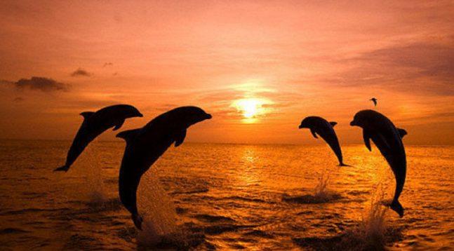 golfinhos-grande-1077x720